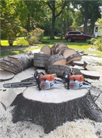 Swell Emergency Tree Removal Service
